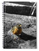 Young Bird Exploring Spiral Notebook