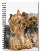 Yorkshire Terrier Dogs Spiral Notebook