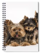 Yorkshire Terriers Spiral Notebook