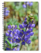 Yosemite Lupine And Ladybug Spiral Notebook