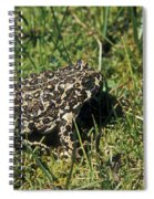 Yosemite Toad Bufo Canorus Spiral Notebook
