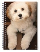 Yoshi Is One Today - Havanese Puppy Spiral Notebook