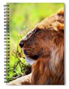 Young Adult Male Lion On Savanna. Safari In Serengeti Spiral Notebook
