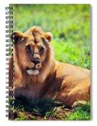 Young Adult Male Lion On Savanna. Safari In Serengeti. Tanzania Spiral Notebook