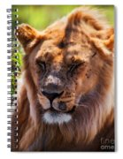 Young Adult Male Lion Portrait. Safari In Serengeti Spiral Notebook