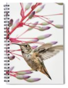Young Allen's Hummingbird Spiral Notebook
