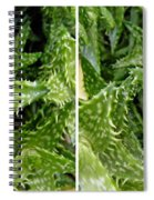 Young Aloe In Stereo Spiral Notebook