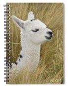 Young Alpaca Spiral Notebook
