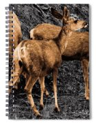 Young And Hungry Sc Spiral Notebook