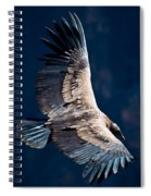 Young Andean Condor Spiral Notebook