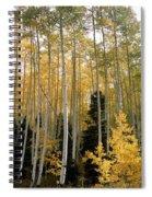 Young Aspens Spiral Notebook