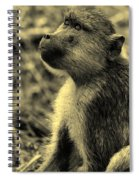 Young Baboon In Black And White Spiral Notebook