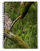 Young Baldy 2 Spiral Notebook