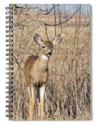 Young Black-tailed Deer Spiral Notebook