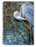 Young Blue Heron Preening Spiral Notebook