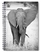 Young Bull Elephant Spiral Notebook