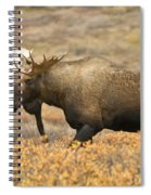 Young Bull Moose Spiral Notebook