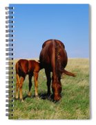 Young Colt And Mother Spiral Notebook