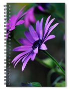 Young Daisies Spiral Notebook