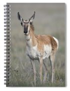 Young Doe Antelope Spiral Notebook