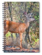 Young Doe Spiral Notebook