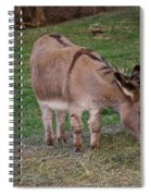 Young Donkey Eating Spiral Notebook