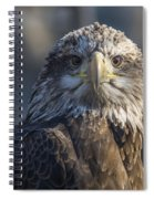 Young Eagle Spiral Notebook