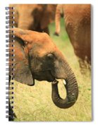 Young Elephant Spiral Notebook