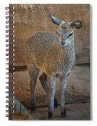 Young Female Klipspringer Spiral Notebook