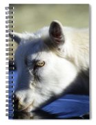 Young Goat Spiral Notebook