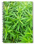 Young Goldenrod Before Blossoms Spiral Notebook