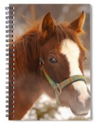 Young Horse In Winter Day Spiral Notebook