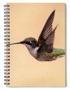 Young Hummingbird - Sailor Spiral Notebook