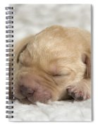 Young Labrador Puppy Spiral Notebook