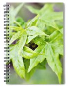 Young Leaves Spiral Notebook