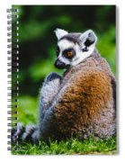 Young Lemur Spiral Notebook