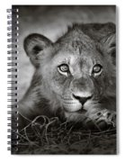 Young Lion Portrait Spiral Notebook