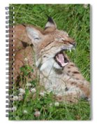 Young Lynx Yawning Spiral Notebook