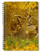 Young Male Buck Spiral Notebook