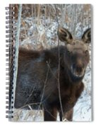 Young Moose 3 Spiral Notebook