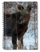 Young Moose 4 Spiral Notebook