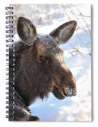 Young Moose Resting Spiral Notebook