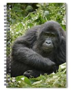 Young Mountain Gorilla Spiral Notebook