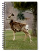 Young Mule Deer Spiral Notebook