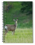 Young Mule Deer Spiral Notebook