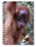Young Orangutan Kiss Spiral Notebook