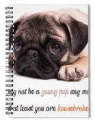 Young Pup Spiral Notebook