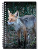 Young Red Fox Spiral Notebook