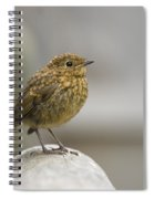 Young Robin Spiral Notebook