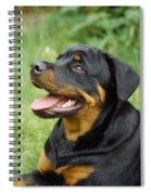Young Rottweiler Spiral Notebook